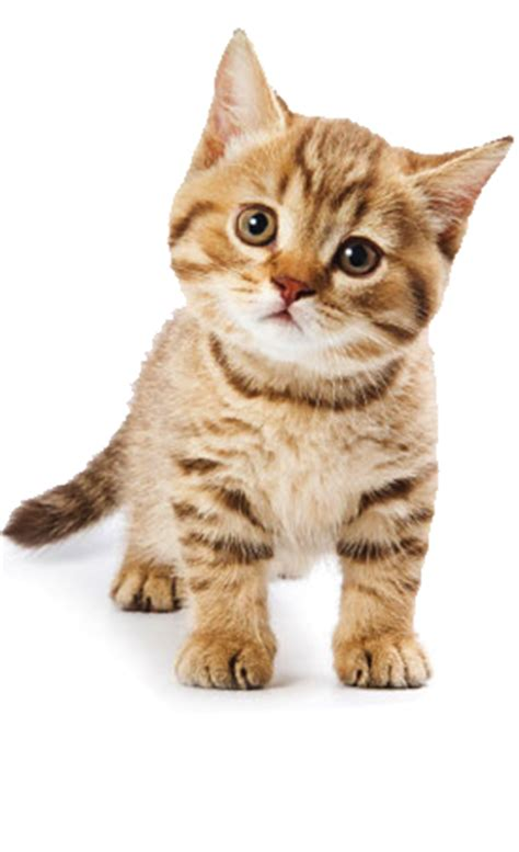 Cute Cat Pictures, Photos, And Images For Facebook, Tumblr