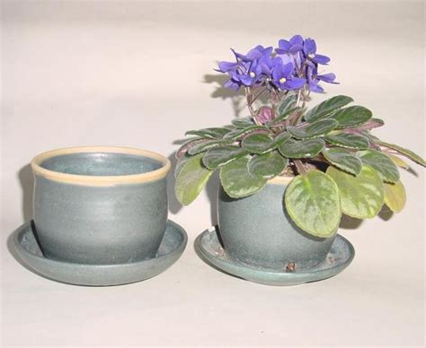 african violets flower pot perfect doesn water