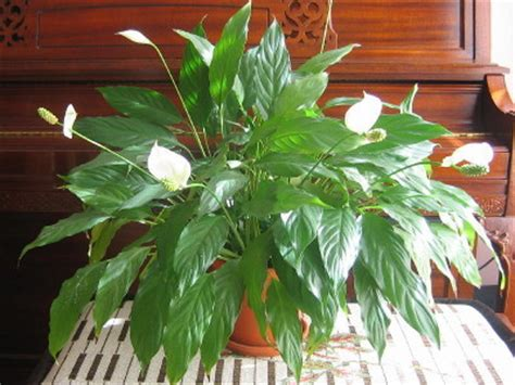 plante verte entretien photo de fleur une pensee fleuriste
