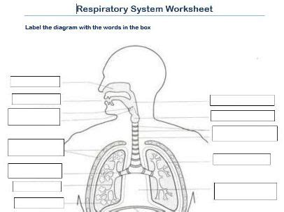 label the respiratory system worksheet by scottactive