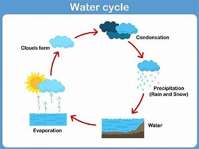 Cycle Ecosystem Energy Flow Water Tutorialspoint Through
