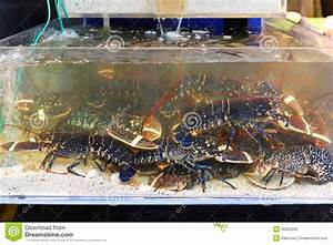 Lobster in tank stock photo. Image of crustaceans, food ...