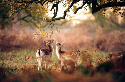 enchanted deer filled forest
