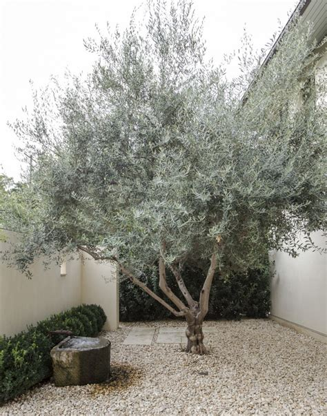 olive tree landscape simple landscaping ideas 10 genius gardens with an olive tree gardenista