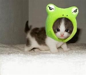 Animal Photo: Cute Animal Wallpaper