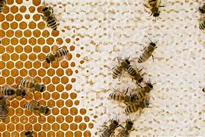 The Secrets of Honeycomb - PerfectBee  Honeycomb
