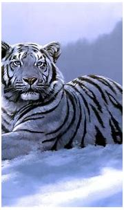 10 Top White Bengal Tigers Wallpaper FULL HD 1080p For PC ...