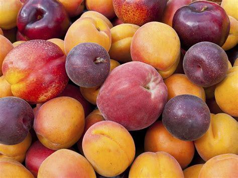 stone fruit  ripe  fruitguys