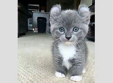 Was is das für eine Katze die ist ja mega süß? Tiere