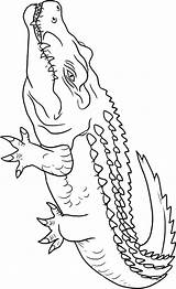 Crocodile Coloring Pages Animals Crocodiles Alligators Animal Drawing Printable Outline Sheets Getdrawings Town Powered Results Coloringtop sketch template