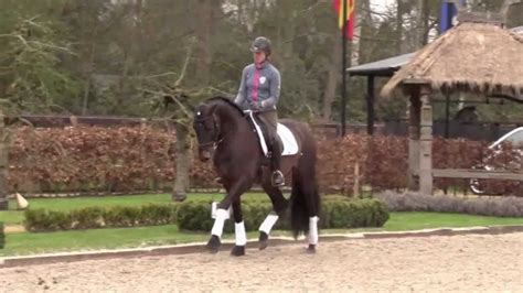 dressage andalusian stallion pre