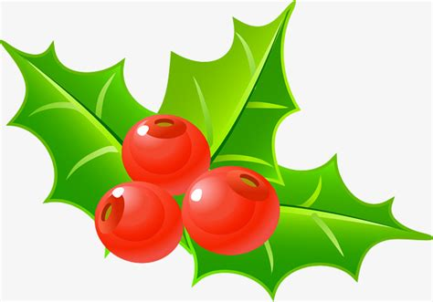 holly decorations  christmas holly clipart simple