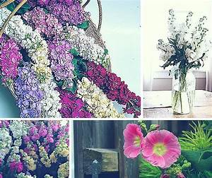 A Beginners Guide To Floral Design  32 Most Commonly Used