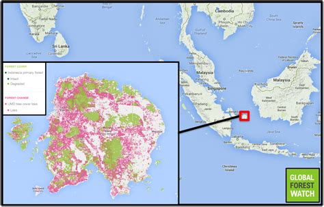 oil palm plantation conflicts  bangka belitung