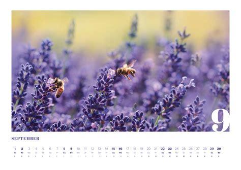 kalender vorlagen  indesign herunterladen