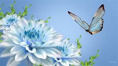 Butterfly Pretty Backgrounds Desktop Butterflies Wallpapers Background