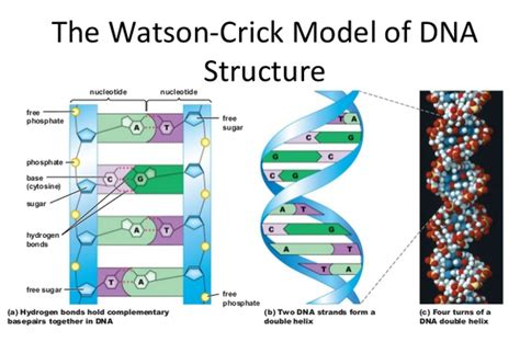 what is the full form of dna quora