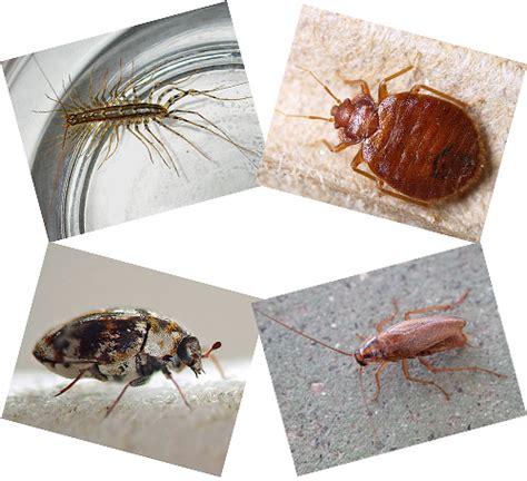 Welche Insekten Beißen by Inl 228 Ndische Insekten Fotos Und Namen Kleinen