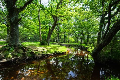 The New Forest National Park - English Cottage Vacation