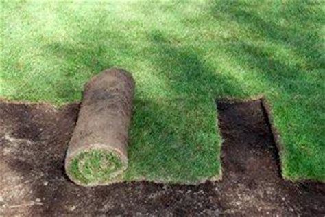 lawn laying cost 2018 sod installation cost average costs to lay grass lawn sod
