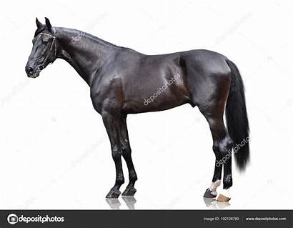 Horse Side Sport Stand Background Powerfull Isolated