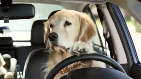 Subaru Dog Commercial