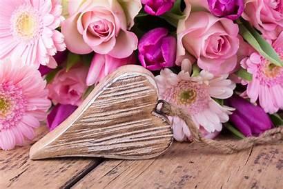 Heart Pink Flowers Gerberas Valentine Roses Wallpapers