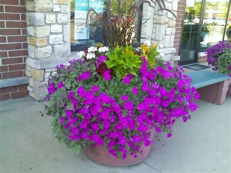 wave petunias in pots 23 best images about easy wave petunias on pinterest planters petunia flower and easy waves