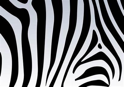 Zebra Animal Achtergrond Gratis Clipart Graphics Druck