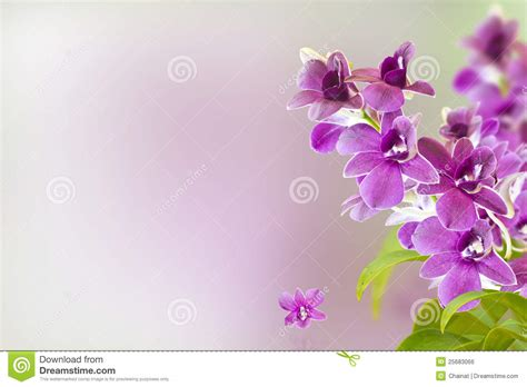Purple Orchid Flower-post Bloom Royalty-free Stock Photo
