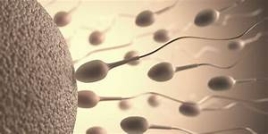 Everything You Need To Know About Sperm  Including Male