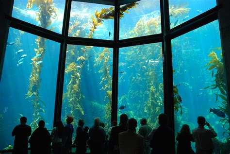 kelp forest tank travel wallpaper and stock photo