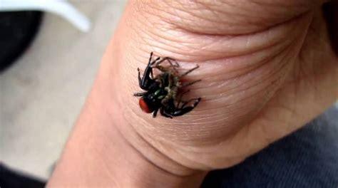 api cuisine le remède pour calmer rapidement une piqûre d 39 araignée