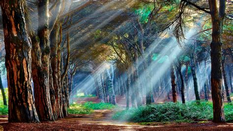 Animated Spiritual Wallpapers - mystical forest wallpaper wallpaper studio 10 tens of