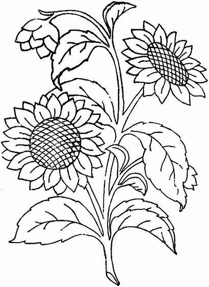 Flores Moldes Imprimir Recortar Desenhos Flor Colorir