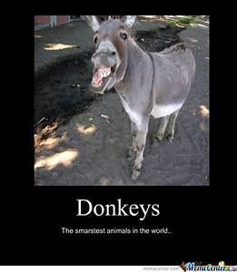 Funny Donkey Meme