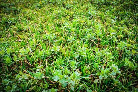 chambre agriculture morbihan couverts semer le plus tôt possible journal paysan breton