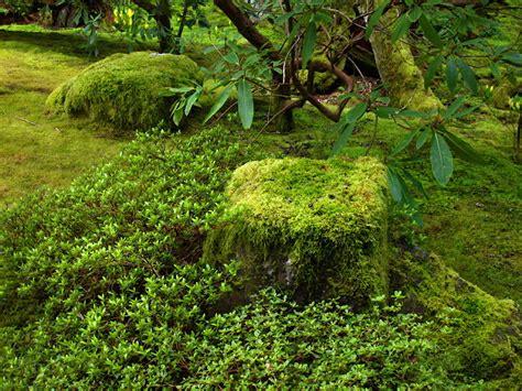gardening moss seattle urban landscape bloedel reserve the moss garden