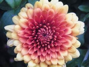 Blumen Im November : die besten 25 november geburts blumen ideen auf pinterest ~ Lizthompson.info Haus und Dekorationen