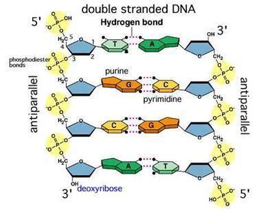 biochemoshpit reflecting biochemistry