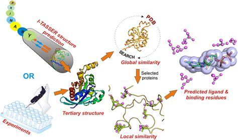 Recognizing Protein-Ligand Binding Sites by Global ...