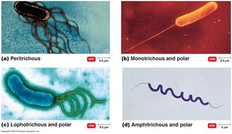 kingdom monera biologyisc