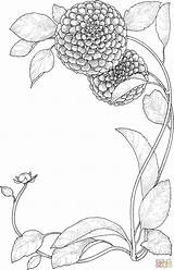Coloring Flower Flowers Zinnia Supercoloring Adult Drawing Zinnias Printable Floral Colouring Embroidery Dibujo sketch template