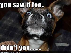 Picture Gallery: Funny Dogs With Captions!