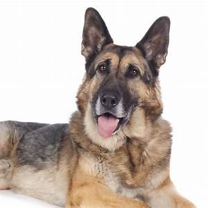 Näpfe Für Hunde : ern hrung alter hunde die wichtigsten f tterungsregeln tierarzt dr h lter royal canin hills ~ Frokenaadalensverden.com Haus und Dekorationen