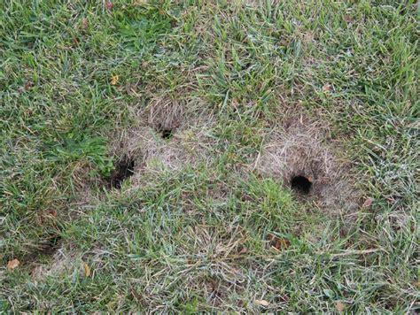 Hunde Urin Rasen