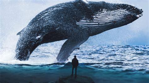 wallpaper blue whale man dream water  fantasy