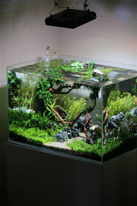 25+ Best Ideas About Aquarium On Pinterest Aquarium