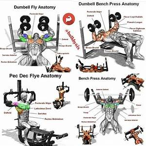 Upper Body Training  U0026 Superset Biceps Blast - Weighteasyloss Com