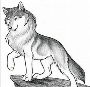 Animal Jam Arctic Wolf Drawings Sketch Coloring Page